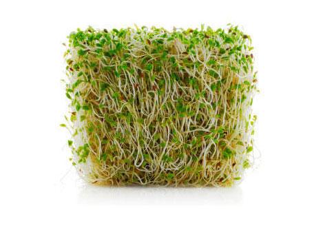 Bio toutes les graines que vous pouvez faire germer - Faire germer des graines ...